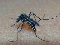 "Saiba tudo sobre o ""Aedes aegypti"""