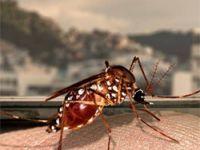 Radis analisa tríplice epidemia provocada pelo Aedes