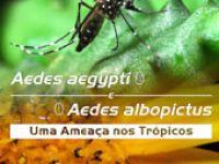 Documentário explica características dos mosquitos Aedes aegypti e Aedes albopictus